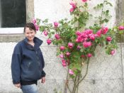 Pink roses & Meg - 15072013