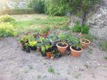 Plants in pots - 17072013