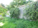 Apple trees 4 - 12082013