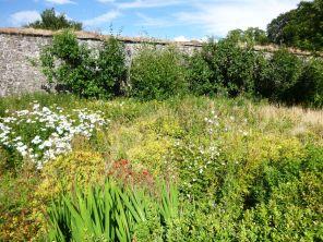Flower garden - 12082013