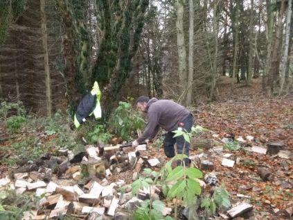 Tony splitting logs 2 - 24112013