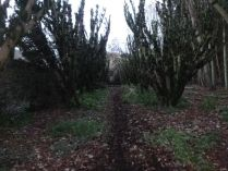 Yew Avenue completed - 30112013