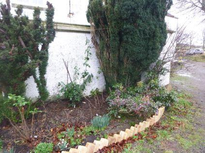 Rose garden 2 - 23022014