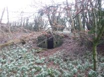 Snowdrops in the woods 3 - 23032014