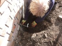 planting grapevine 2 - 12042014