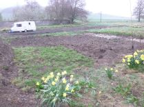 Turfing area by new drive - 25042014