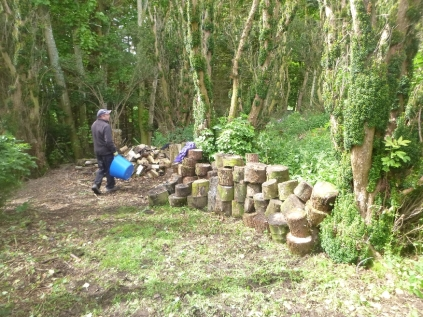 Clearing the yew avenue - 28052014
