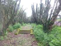 Yew avenue cleared 2 - 29052014