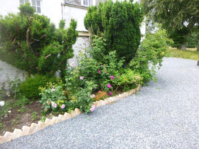 Rose garden - 29062014