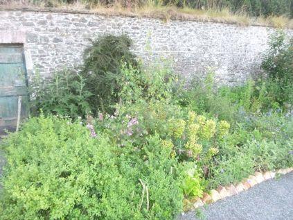 Herb border - 20072014