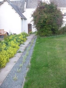 Lavender path - 20072014