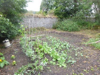 Veggie patch - 04082014