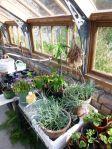Glasshouse plants - 29092014