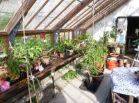 Glasshouse plants 3 - 29092014