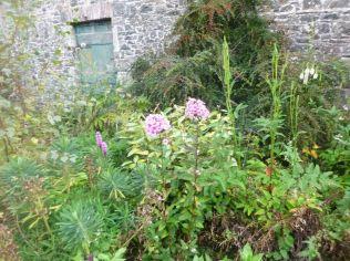 Herb border 3 - 11092014