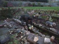 New wall - Alpine garden - 3 - 21122014