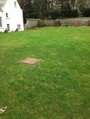 Lawn - 16032015 - SH