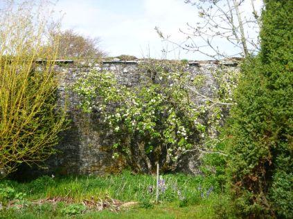 Aplpe blossom in flower garden - 17052015