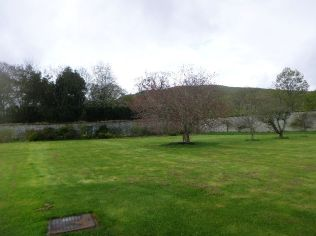 Cherry tree in lawn - 10052015