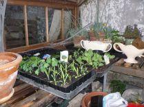 Glashouse seedlings 1 - 02052015