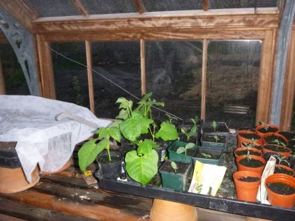 Glasshouse seedlings 2 - 02052015