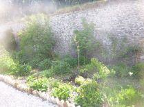 Herb border - 30052015