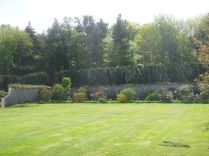 Rhod bed across lawn - 30052015