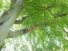 Branch down 2 - 07062015