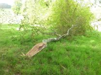 Branch down 3 - 07062015