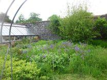 Flower garden through arch - 20062015
