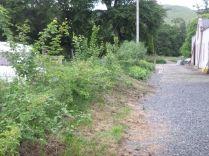 Hedge - 27062015