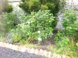 Rose Garden 2 - 20062015