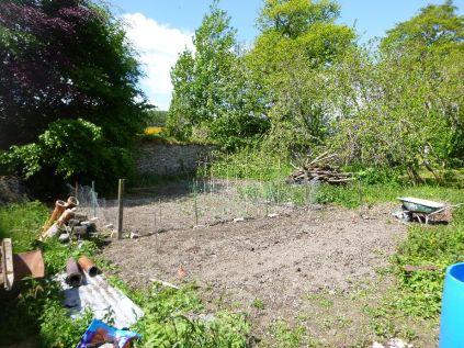 Veg Patch - 07062015