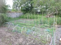 Veg patch - 27062015