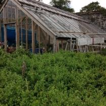 Glasshouse blinds 2 - July 2015 - SH