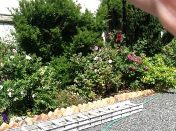 Rose garden - 09072015 - SH