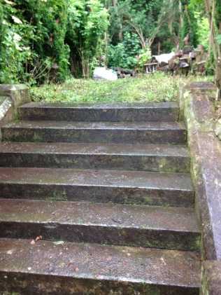 Yew avenue clearing 2- July 2015 - SH