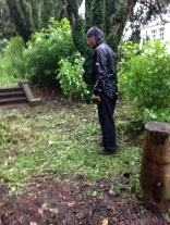 Yew avenue clearing 6 - July 2015 - SH