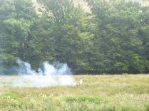 Burning ragwort - 20082015