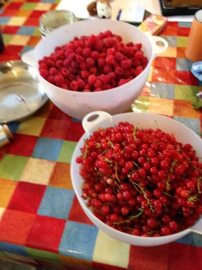 Harvest - rasps & redcurrants - 09082015 - SH