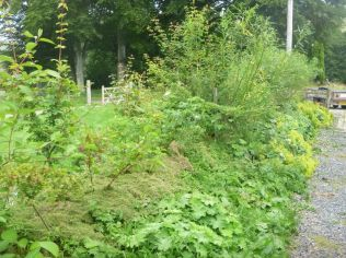 Mulching hedge - 13082015