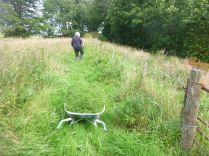 New hedge - weeding - 30082015