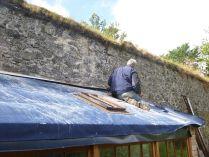 Raggle on potting shed - 04082015