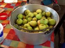 Windfall apples - 24082015 - SH