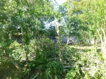pruning plum trees - 08092015