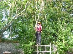 Pruning plum trees 2 - 05092015