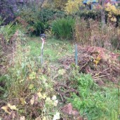 Flower garden 1 - 13102015 - SH