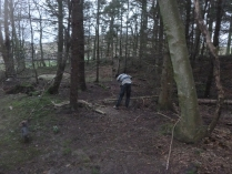 Clearing trees in woods - 05022016