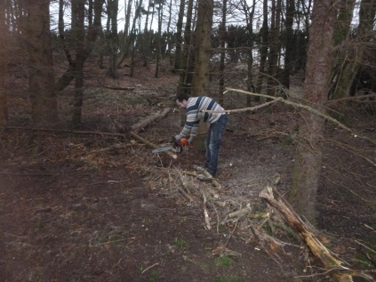 Clearing trees in woods 2 - 05022016