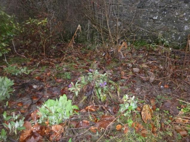 Euphorbia - 05022016